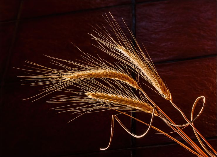 Picture Of Dried Grass Cereal Grain