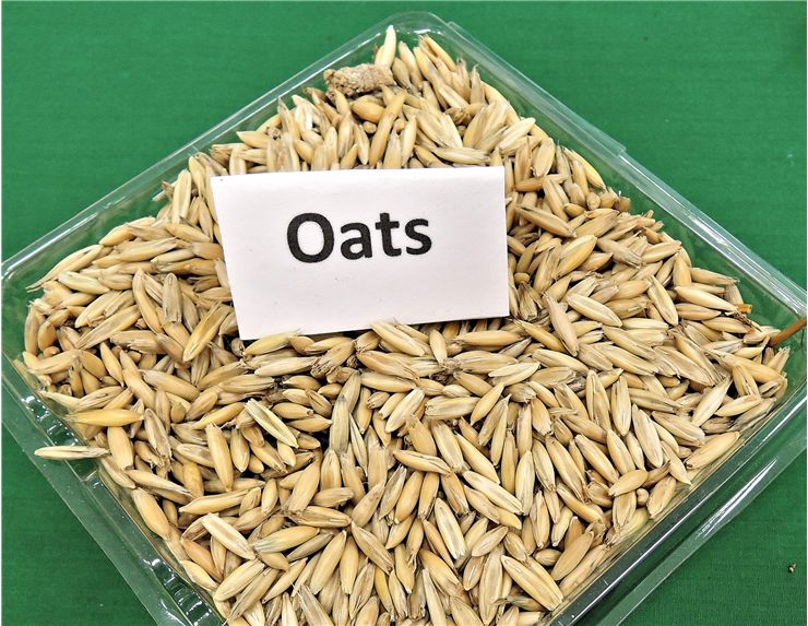 Picture Of Oats Grain Cereal